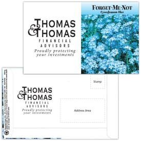 Mailable Series Seed Packet- Forget-Me-Not Blue